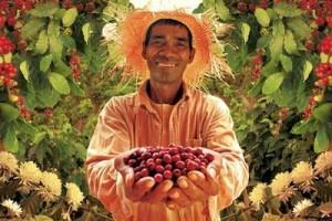 bean farmer